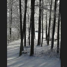 Patricia Overmoyer - Snow Trees and Sunlight-II