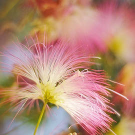 Jenny Rainbow - Softly Spoken