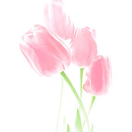 Jennie Marie Schell - Softness of Pink Tulip Flowers