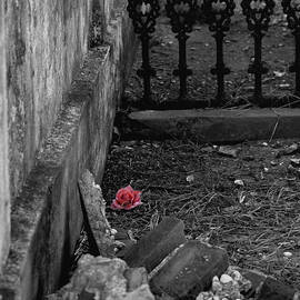 Renee Barnes - Solitary Rose
