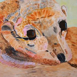 Soulful Eyes Of A California Sealion by Meryl Goudey