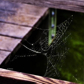 Spider Web On A Rainy Day by Edward Peterson
