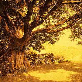 Spiritual Place. Wicklow Mountains. Ireland by Jenny Rainbow
