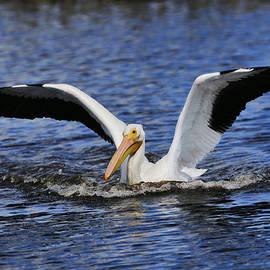 Splash Landing by Bill Dodsworth