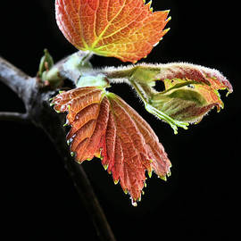 JC Findley - Spring