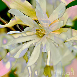 Star Magnolia Blossom by Carol F Austin