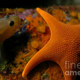 Starfish And Friend by Mitch Shindelbower