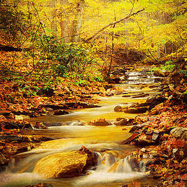 Streams of Gold by Darren Fisher
