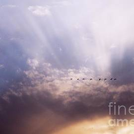 Larry Ricker - Sunbeams and Geese