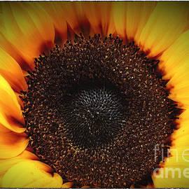 George Oze - Sunflare