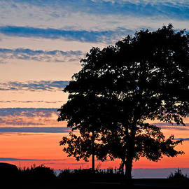 Sunset tree by David Freuthal