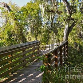 Swamp Walkway by Carol  Bradley