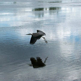 Julien Boutin - The Great Blue Heron