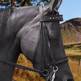 Christine Till - The horse - God