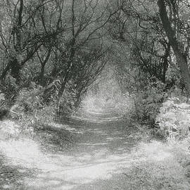 Simon Marsden - The Icknield Way