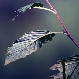 Carolina Artemis Tamvaki - The leafs