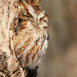 The master of camouflage by Mircea Costina Photography