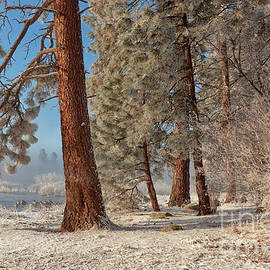 Beve Brown-Clark Photography - The Smell of Pines II