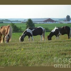 Three Horses by Patricia Overmoyer