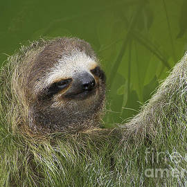 Three-Toed Sloth by Heiko Koehrer-Wagner
