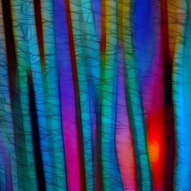 Judi Bagwell - Through the Trees