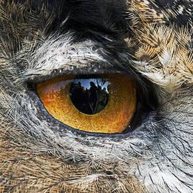 Cheryl Cencich - Through wise eyes