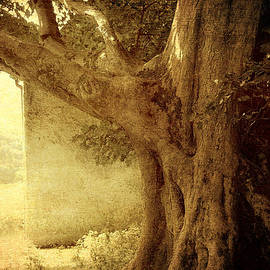 Jenny Rainbow - Touch of History. Wicklow. Ireland