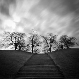 Peter Levi - Tree Poems