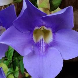 Tropical #flower #florida #webstagram