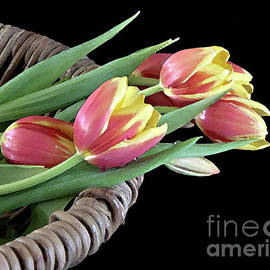 Tulips From the Garden by Sherry Hallemeier