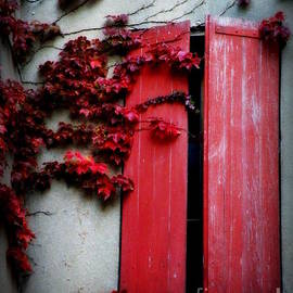 Lainie Wrightson - Vines on Red Shutters