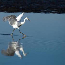 Walking on Water by Karol Livote