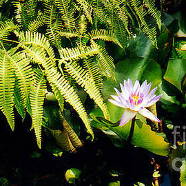 Water Lily With Ferns by Jerome Stumphauzer