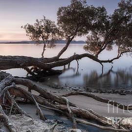 Michael Howard - WATERCOLOUR