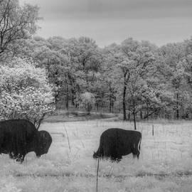 Jane Linders - Where the Buffalo Roam