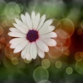 Marianna Mills - White Daisy in a Sunset