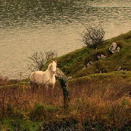 White horse by Barbara Walsh