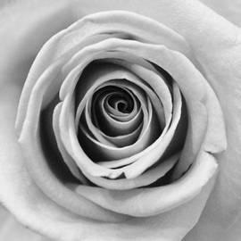 Sophie Elliott - White Rose