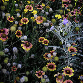 Mauricio Jimenez - Wildflowers 5