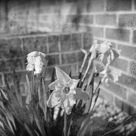 HW Kateley - Wilted Flowers