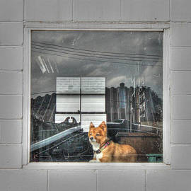 J Laughlin - Window Watcher