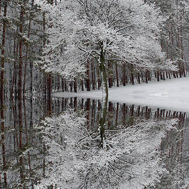 Aimee L Maher Photography and Art Visit ALMGallerydotcom - Winter Reflection