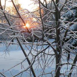 Vicky Tarcau - Winter Sun light