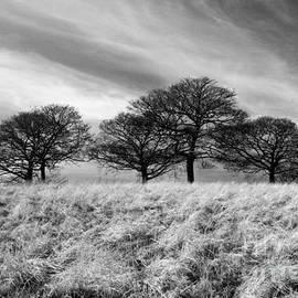 John Chatterley - Winter Trees BW