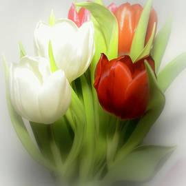 Laura DAddona - Winter Tulips