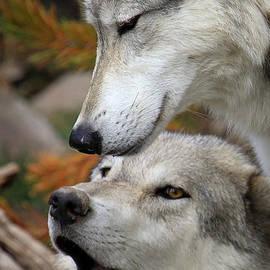 Steve McKinzie - Wolf Talk