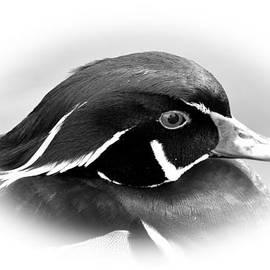 Todd Hostetter - Wood Duck