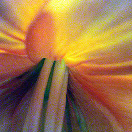 Mary Halpin - Wow flower