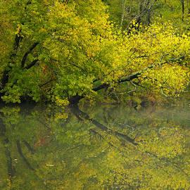 Yellow Autumn by Karol Livote