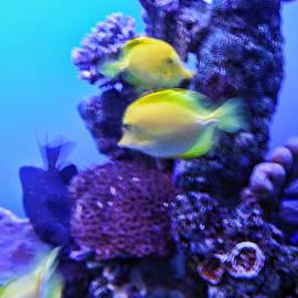 Linda Phelps - Yellow fish with Purple Coral